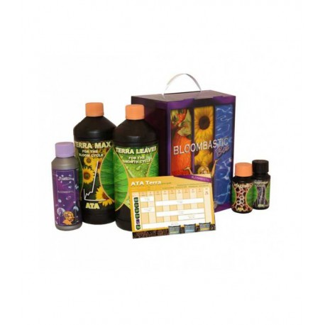 B'Cuzz Bllombastic Box Starterspakket