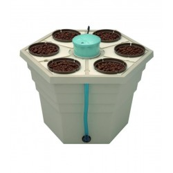RainForest2® 6'' 12v 6 x pot 15cm