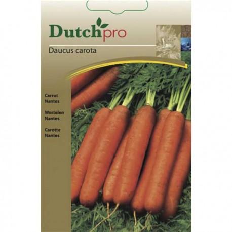 DutchPro zaden Wortel