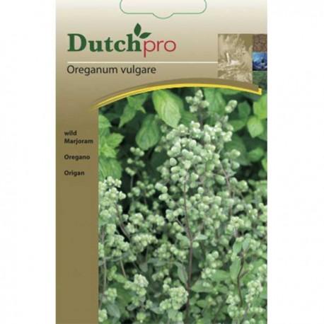 Dutchpro zaden Oregano