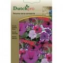 Dutchpro zaden Petunia gemengd