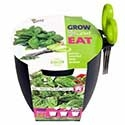 Buzzy Grow kits